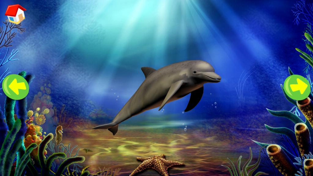 Sound for Marine animals and amphibians